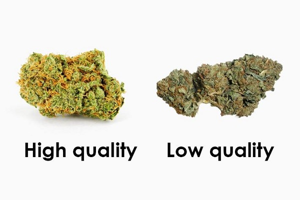 High and low quality of marijuana